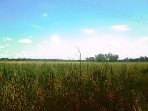 Arocha Swamp