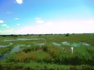 Olweny Swamp
